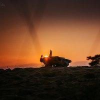 Череп коровы и закат :: Аннета /Анна/ Шу