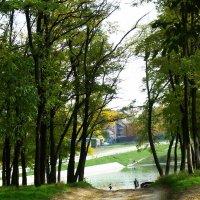 Природа в дачном поселке :: татьяна