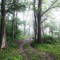 лес :: Алексей Левченко