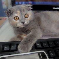 Глазки...когда зазвонил телефон и..... разбудил!!!)))))))))))) :: Людмила Богданова (Скачко)