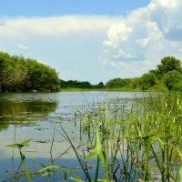 озеро :: владимир ковалев