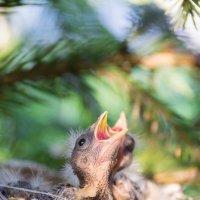 Птенцы :: Alex Bush