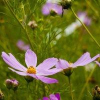Космический цветок :: Ольга Винницкая