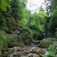 лесной ручей :: Николай Танаев