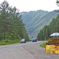На Алтае время сбора мёда. :: val-isaew2010 Валерий Исаев