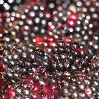 Rubus caesius :: Dr. Olver  ( ОлегЪ )