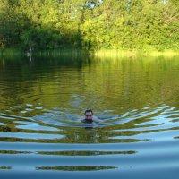 Хорошо на озере в жаркий день.. :: марина ковшова