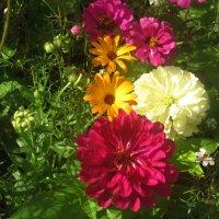 Цветы августа :: Елена Семигина