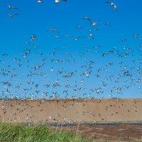 птицы :: Наталья Литвинчук