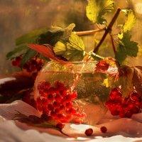 Неспелые гроздья калины :: LNemykina