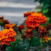 Цветочки :: Света Кондрашова