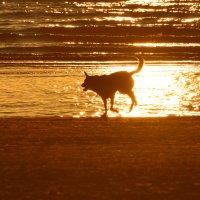 собака на море :: linnud