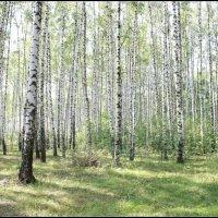 Лето :: Александр Moryak 34