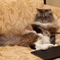 Сиеста для кота :: Serge N
