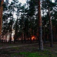 Глядя на луч пурпурного заката... :: Владимир Безбородов