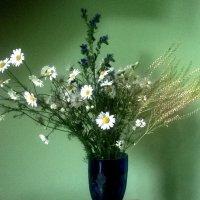 Ромашки и травы :: Наталия Каминская