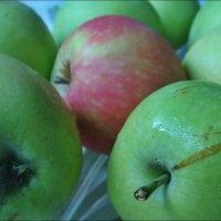 Особенное яблочко :: Нина Корешкова