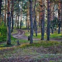 В лесу :: Mila Kulikova