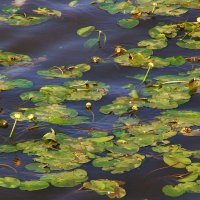 глубокая вода :: elena manas