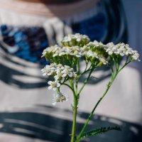 полевые цветы :: Света Кондрашова