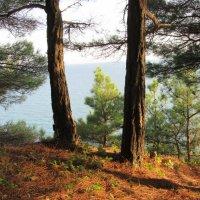 Лес, море, солнце... Что ещё надо летом?! :: Вячеслав Медведев