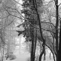 Зима, холода... :: Ольга Тумбаева