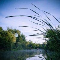 На реке. :: Елена Данько