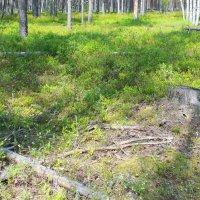 Лесные чащи... :: Tatiana Markova