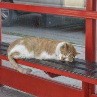 На автобусной остановке. :: юрий Амосов
