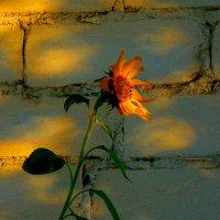Не дотянуться до солнца... :: Милла Корн