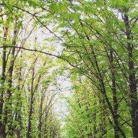 Красивые деревья :: Сергей Дубовик