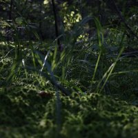 мох в лесу :: andrew585 585