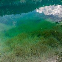 IMG_5353-1 Голубое оз водоросли :: Олег Петрушин