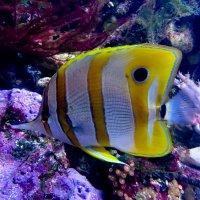 Рыбка в океанариуме :: Станислав Гераськин