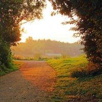 Солнце я иду к тебе :: Alexander Andronik