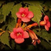 Под лазурью звездоокой дышат нежные цветы... :: Людмила Богданова (Скачко)