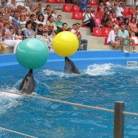 Дельфины :: Яна Чепик