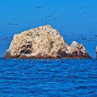 Перу. «Масло-туманистый» океан птичьих островов Балестас :: Андрей Левин