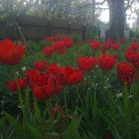 Кусочек воли в саду :: Lera Yurievna