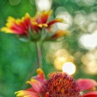 Цветочный пожар :: Андрей Майоров