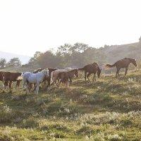 кони на закате :: Наталья