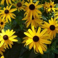 Цветы на клумбе города :: Наиля