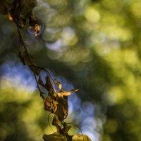 Листья пожелтевшие по ветру летят... :: Галина Стрельченя