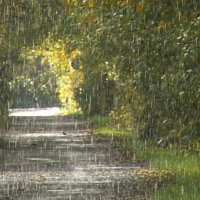 Слепой дождик :: Ivolga