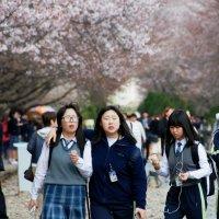 Gyeonghwa Station (Cherry Blossom Road) :: Tatiana Belyatskaya