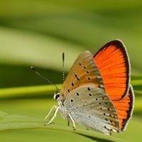 Бабочка :: Валерий Подобный