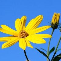 Жёлтое и голубое. :: Paparazzi