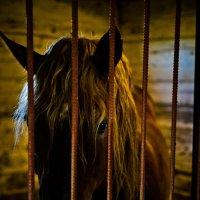 Конь в монастырской конюшне :: Валентин Прокудин