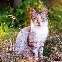 Красавец кот :: Сергей Дишук