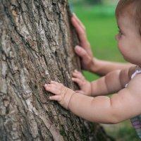 Маленькие пальчики исследуют кору дерева :: Angelika Faustova